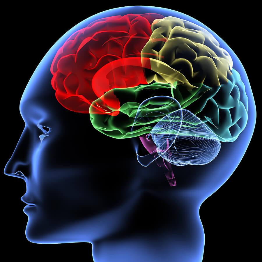 bigstock-Brain-2819169