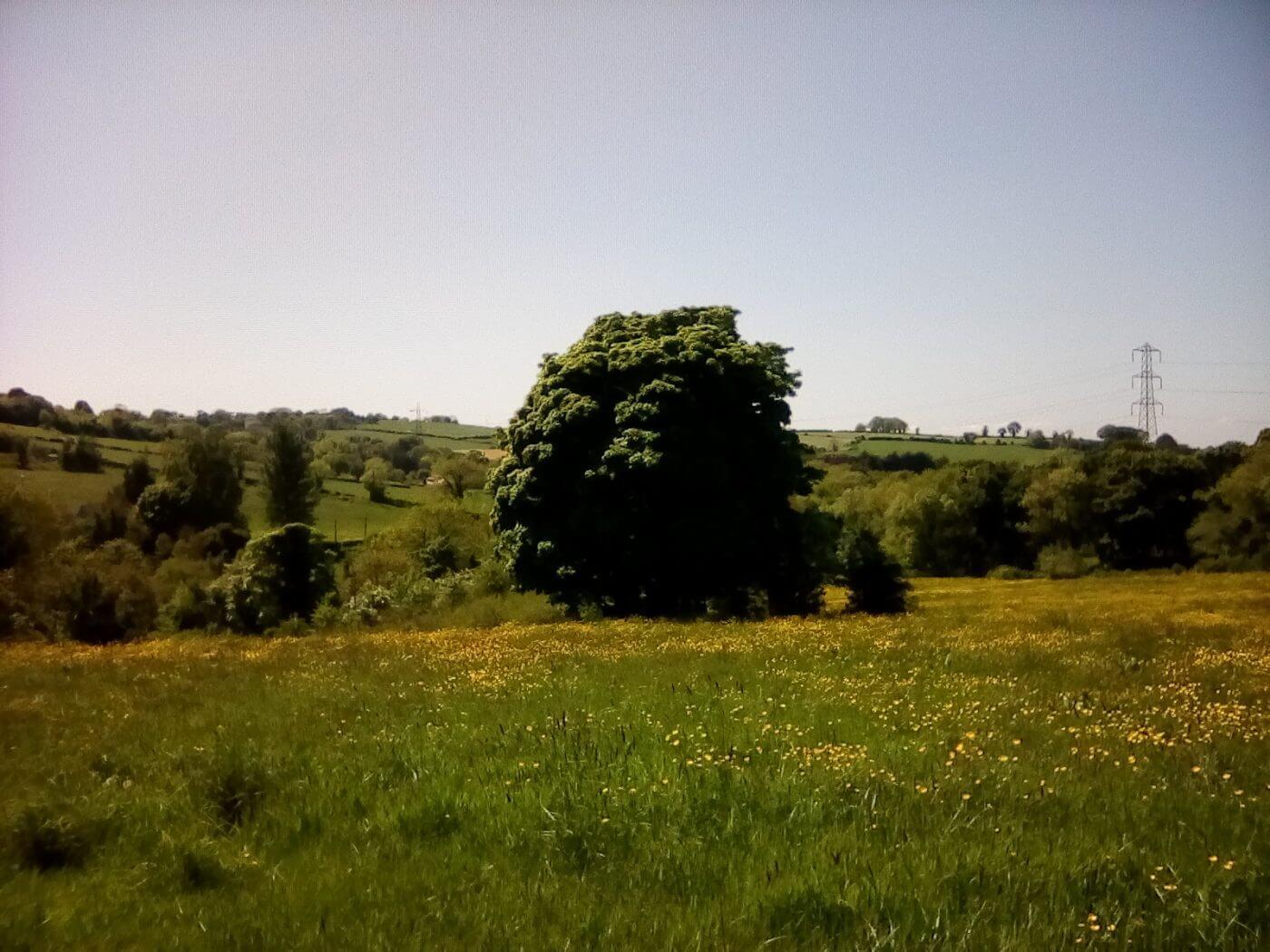 Archos 80b Tree